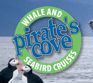 Pirate's Cove Whale and Seabird Cruises